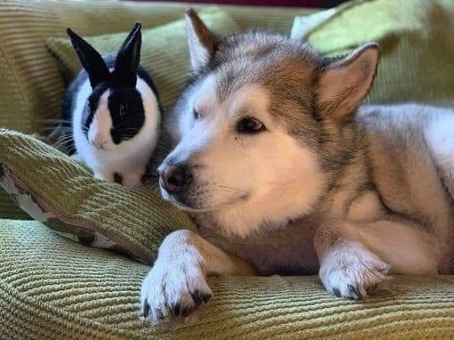 Doggo and bunny