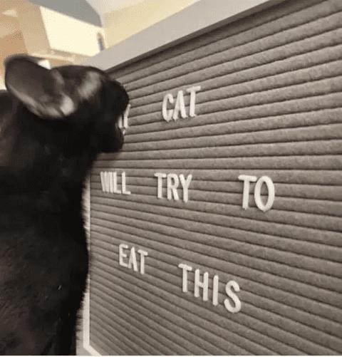 Cat eating plastic letters