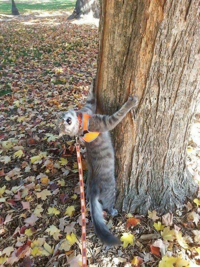Cat hugs the tree