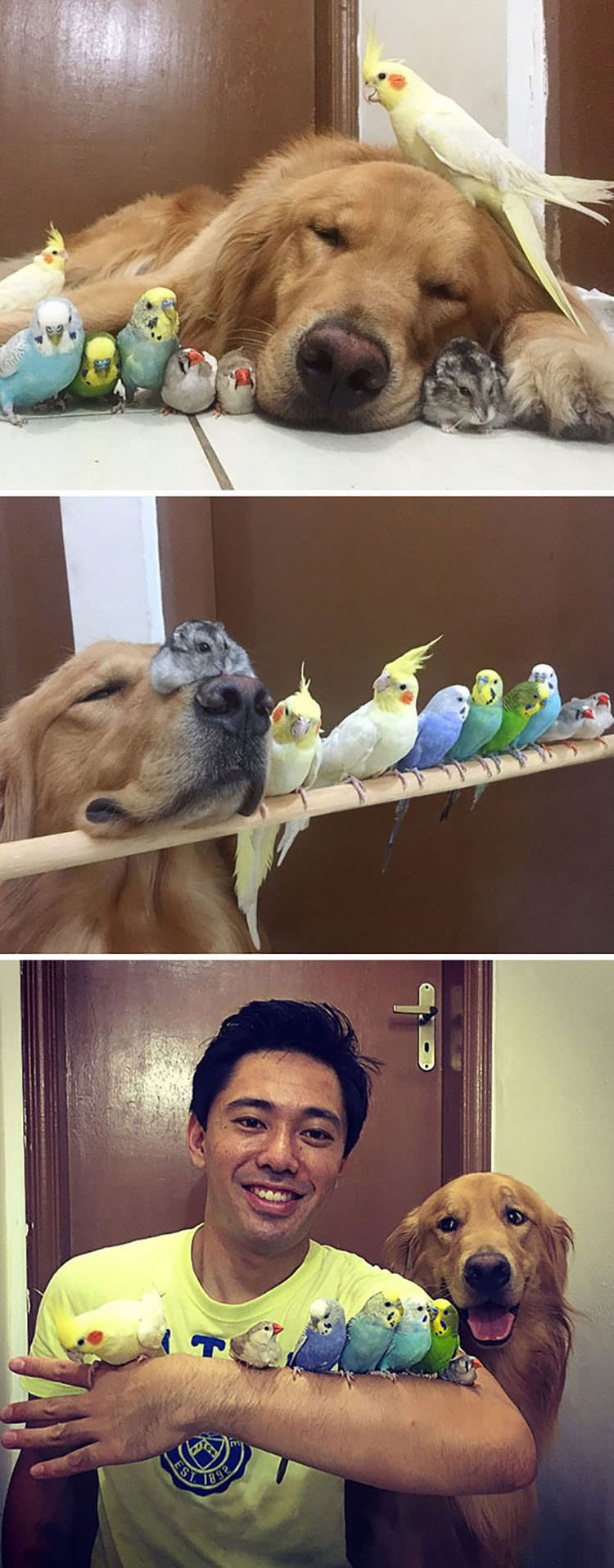 dog with loads of birds