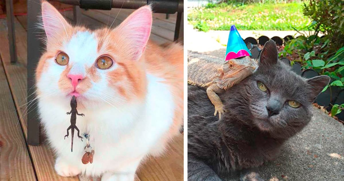 cats with lizards