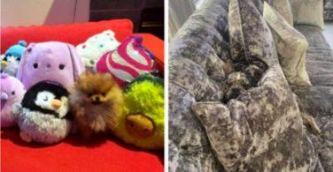 Sneaky dog hidden dogs challenge